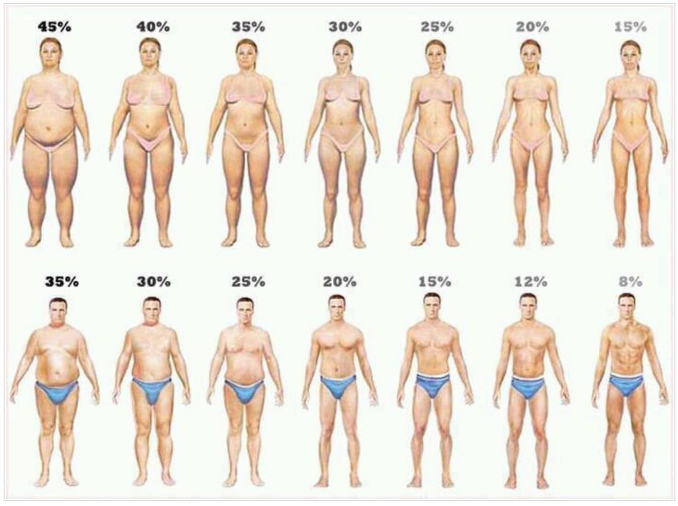 body fat percentage looks like